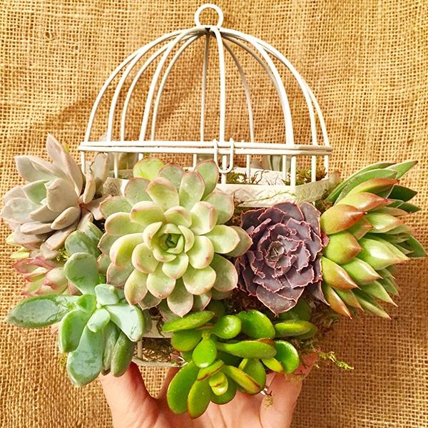 birdcage succulent garden